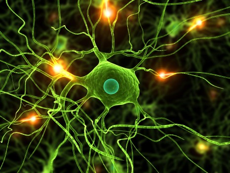 Active Nerve Cells,